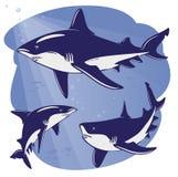 акулы белые Стоковое фото RF