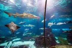 Акула в воде Стоковая Фотография RF