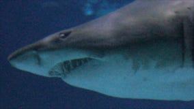 Акула заплывания сток-видео