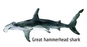 Акула молота акварели большая белизна cogwheel предпосылки изолированная иллюстрацией Для дизайна, печати, предпосылка, футболка иллюстрация штока