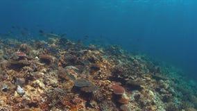 Акула рифа Whitetip на коралловом рифе с рыбами множества Стоковое фото RF