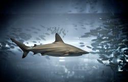 Акула стоковое изображение