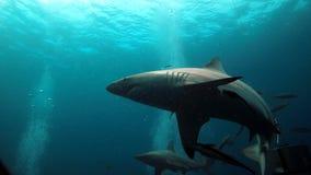 Акулы и пузыри Стоковые Фото