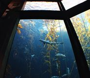 Акулы и рыбы Стоковые Фото