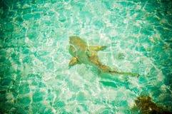 Акулы 10 рифа Мальдивов Стоковое Изображение RF