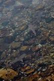 Акулы рифа младенца Стоковые Изображения RF