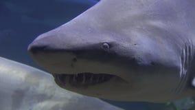 Акулы, твари моря, рыбы, животные сток-видео