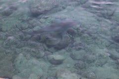 Акулы #5 Стоковое Фото
