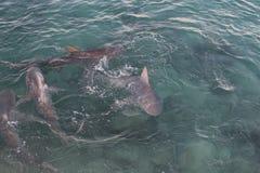 Акулы #4 Стоковая Фотография