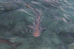Акулы #3 Стоковые Изображения