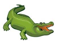 аллигатор большой Стоковая Фотография