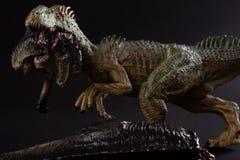 Аллозавр сдерживая тело динозавра на темной предпосылке стоковая фотография