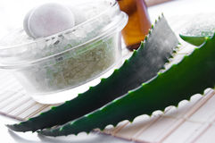 алоэ покидает море vera соли Стоковое фото RF