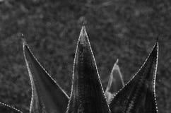 Алоэ черное изображение принципиальной схемы 3d представило белизну Стоковые Фото