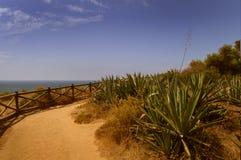 Алоэ vera около побережья стоковые изображения rf