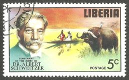 Альберт Schweitzer, африканский буйвол Стоковые Изображения RF