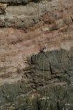 Альпинисты rappelling стоковое фото rf