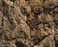 Альпинист утеса отдыхая во время трудного подъема Стоковая Фотография RF