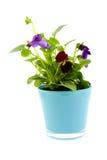 альт бака цветков Стоковые Фото