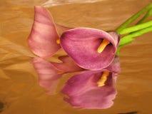 алюминиевая лилия фольги arum Стоковое Изображение