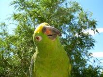 Амазонка возглавила желтый цвет стоковые изображения