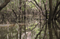 Амазонка затопила джунгли стоковое фото rf