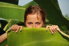 Амазонка Стоковые Фотографии RF