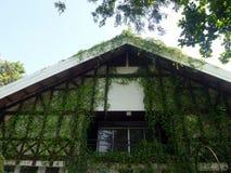 Амбар зеленого coveref лозы старый Стоковая Фотография
