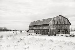 Амбар, Квебек - черно-белый стоковая фотография rf