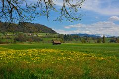 Амбар на поле лета швейцарском зеленом Стоковые Фотографии RF