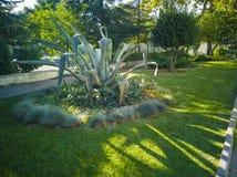 Американа кактус 12-Agave стоковые фотографии rf