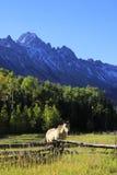 Американская квартальная лошадь в поле, утесистые горы, Колорадо Стоковые Фотографии RF