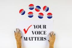Американская концепция активизма избрания с лапками собаки стоковые фото