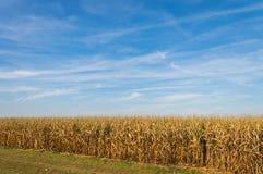 Американская обрабатываемая земля, ландшафт с голубым небом Стоковые Фотографии RF