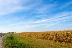 Американская обрабатываемая земля, ландшафт с голубым небом Стоковое Изображение RF