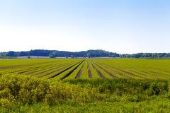 американская сельская местность Стоковая Фотография