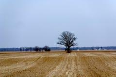 американская сельская местность midwest Стоковые Фотографии RF