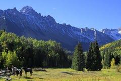 Американские квартальные лошади в поле, утесистые горы, Колорадо Стоковые Фото