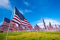 американские флаги поля Стоковые Изображения