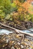Американские цвета падения каньона вилки Стоковая Фотография