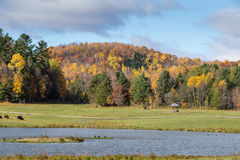Американский буйвол поля в поле осенью Стоковая Фотография