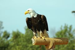 американский идол Стоковое фото RF