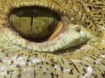 американский крокодил Стоковые Фото