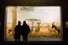 Американский музей для национальной истории, США Стоковое Изображение