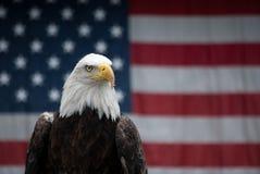 американский орел Стоковые Фотографии RF
