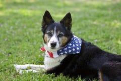 американский шарф гордости флага собаки пестрого платка Стоковое Фото