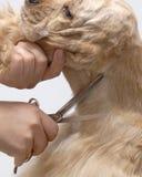 американский spaniel любимчика собаки плитаа Стоковые Изображения RF