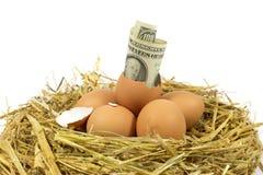100 американских долларов Билла приходя из сломленного яичка в гнезде Стоковое фото RF