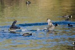 2 американских простофили воюя на воде Стоковые Фото