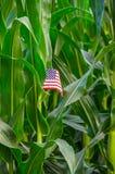 Американское дело кукурузного поля фермы страны Стоковые Фото